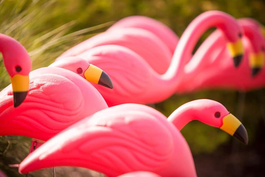 2-8-We-Got-Flocked