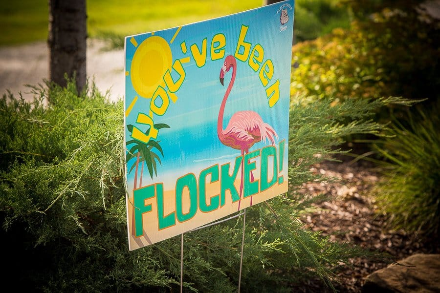 3-8-We-Got-Flocked