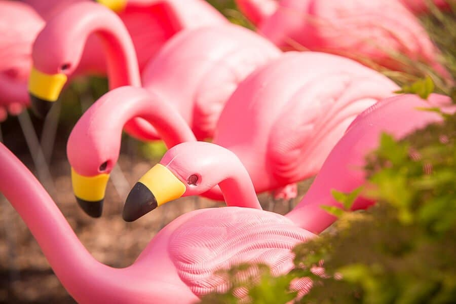 4-8-We-Got-Flocked