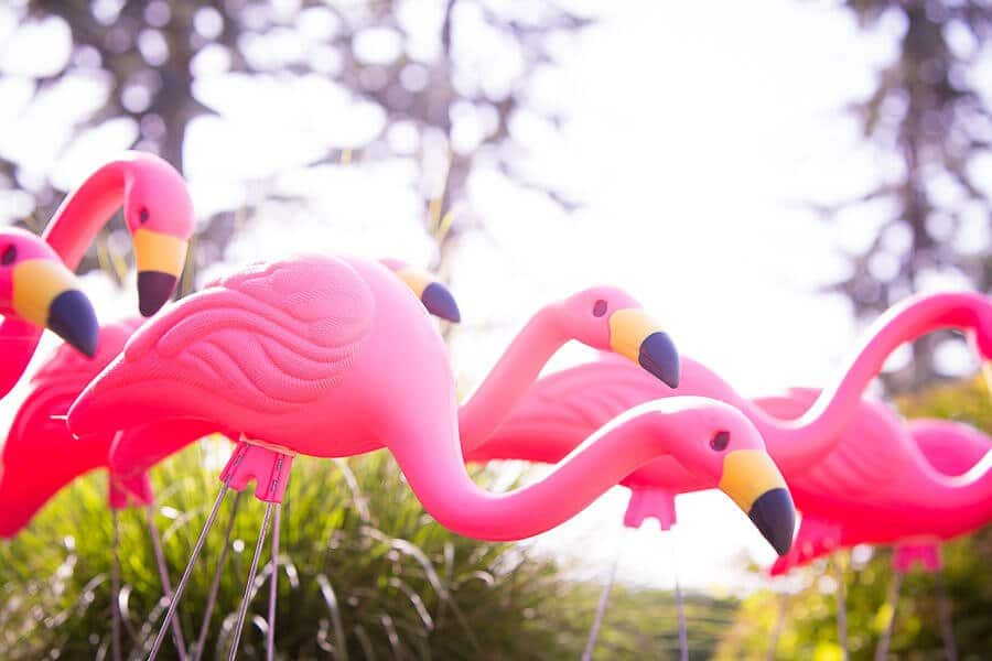 8-8-We-Got-Flocked